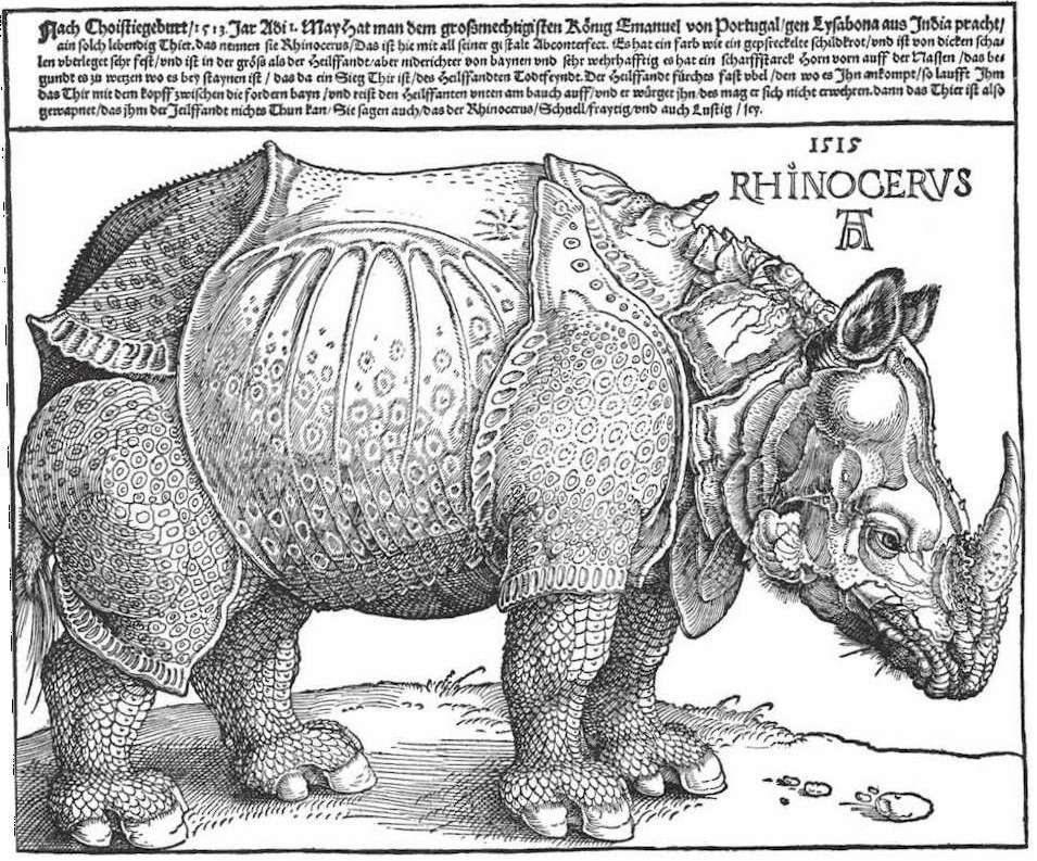 Dürer-rhino klein